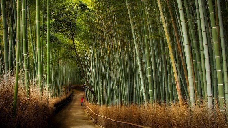Forêt de bambou de Sagano